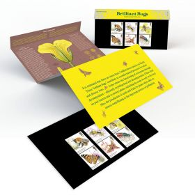 Brilliant Bugs Presentation Pack