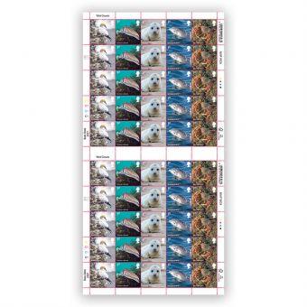 Wild Coasts Full Sheet 1st Class x 50 – Northern Gannet