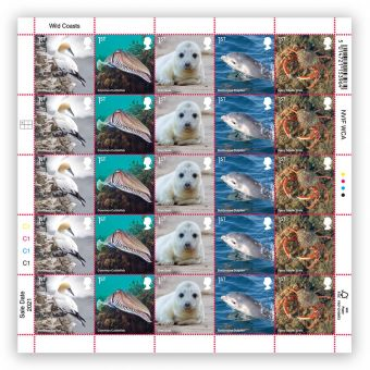 Wild Coasts Half Sheet 1st Class x 25 – Northern Gannet