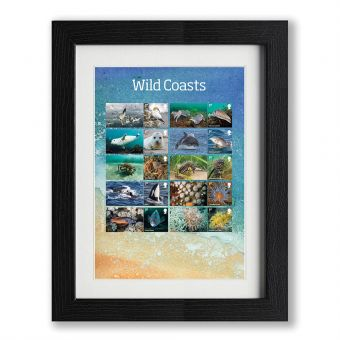 Framed Wild Coasts Collector's Sheet