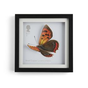 N3063 Royal Mail Framed 3D Butterfly Print 1