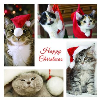Christmas Cats Pack of 10 Charity Christmas Cards