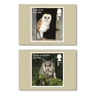 Owls Set of Ten Postcards