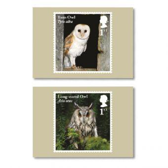 Owls Set of Ten Postcards