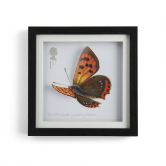 N3063 Royal Mail Framed 3D Butterfly Print