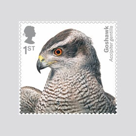 Royal Mail Birds of Prey